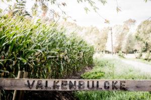 valkenburgh-130